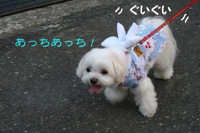 IMG_5385花火7