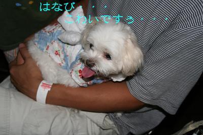 IMG_5421花火10こわい