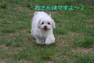 IMG_5509孝行1