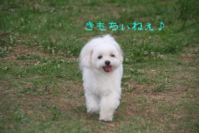 IMG_5525孝行2