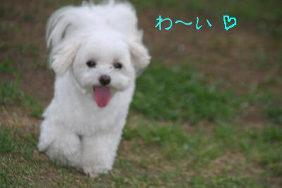 IMG_5527孝行3
