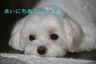 IMG_5538孝行1暑い
