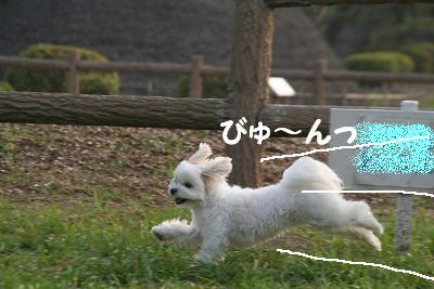 IMG_5568孝行7びゅん