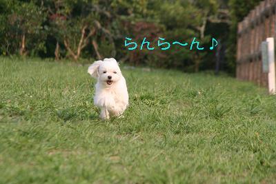 IMG_5571孝行7