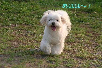 IMG_5582孝行8