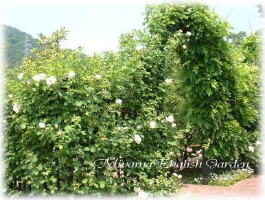 miyama garden3