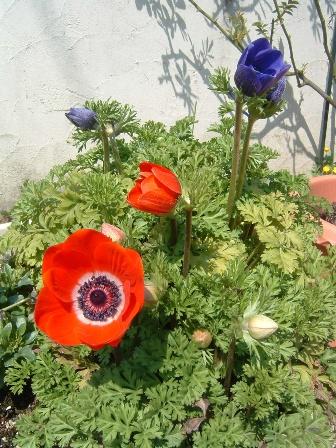 anemone6.jpg