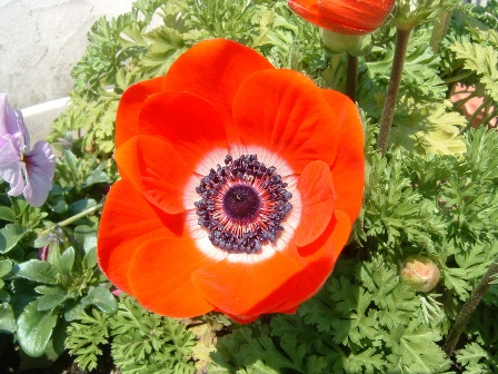 anemone7.jpg