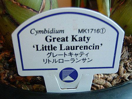 cymbidium4.jpg