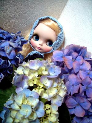紫陽花かわいいなー。