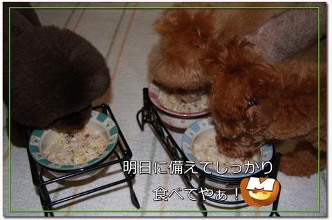 寿司娘とアフロ娘10