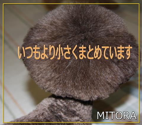 アフロな小熊1