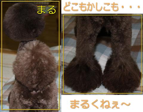 アフロな小熊2