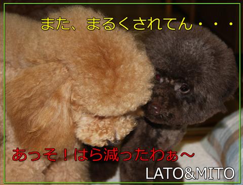 アフロな小熊4