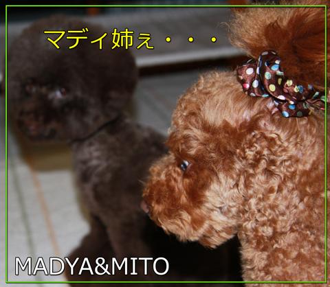 アフロな小熊5