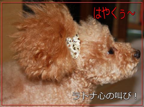 アフロな小熊55