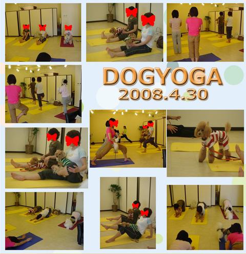 ドッグヨガ20080430