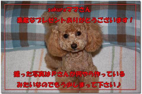sakuraママからのプレゼント5