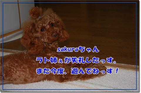 sakuraママからのプレゼント6