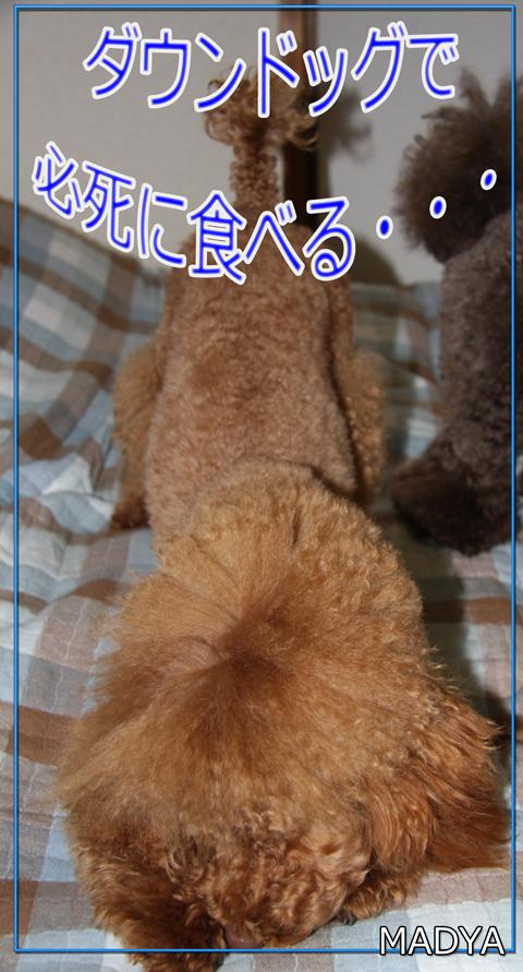 さくら@さんのぷれ5
