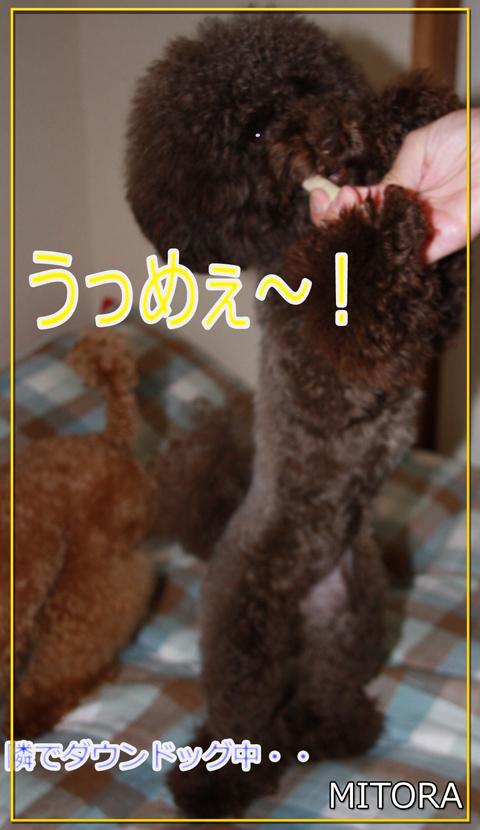 さくら@さんのぷれ6
