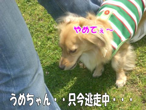うめちゃんとYOGA3