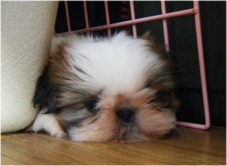 わたし、疲れちゃった。。。