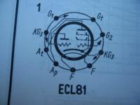 ECL81