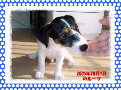 20080624007.jpg