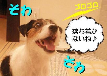 20080727004.jpg