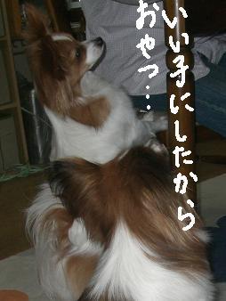 kouji8.jpg