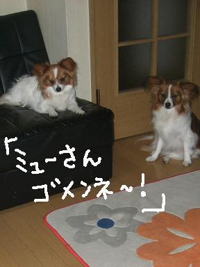 mixyu-sann.jpg