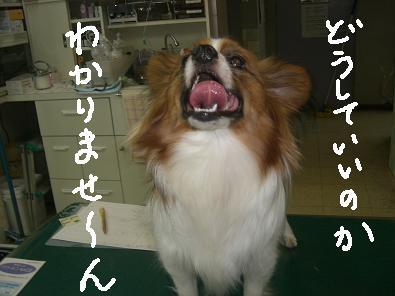 nekon4.jpg