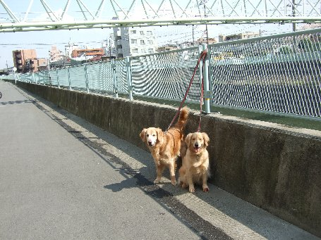 犬日記 031