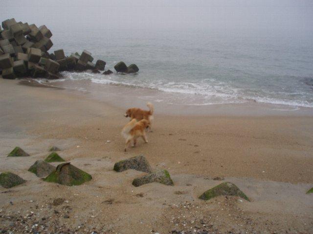 犬日記 179