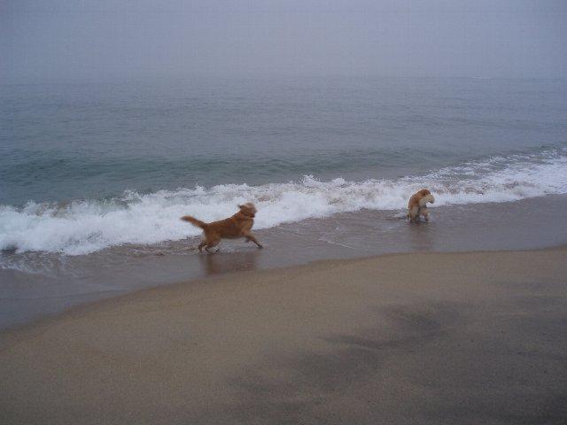 犬日記 188