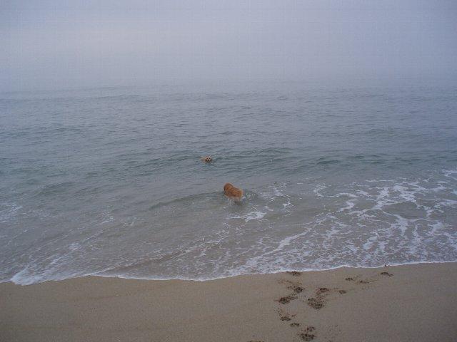 犬日記 194