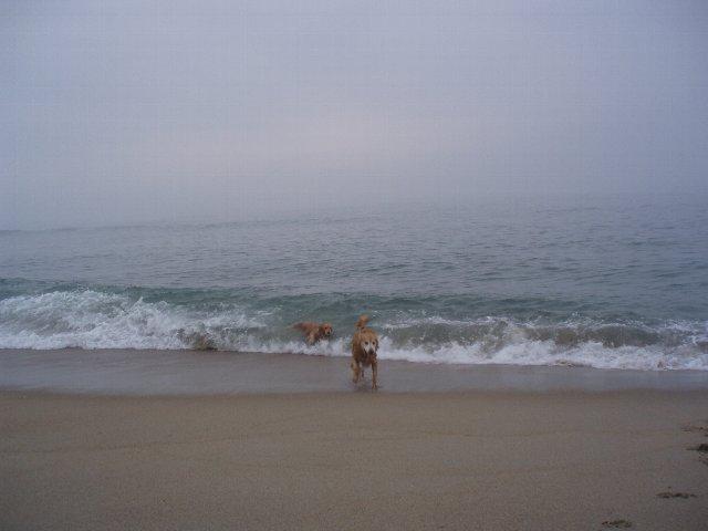 犬日記 195