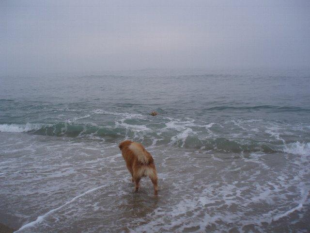 犬日記 197