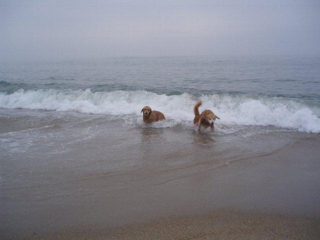 犬日記 198