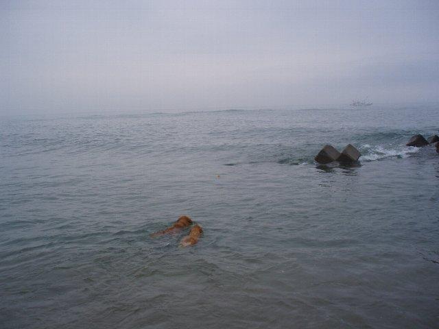 犬日記 207