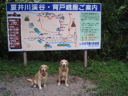 犬日記 216
