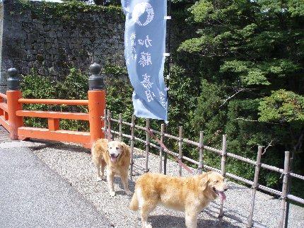 犬日記 279