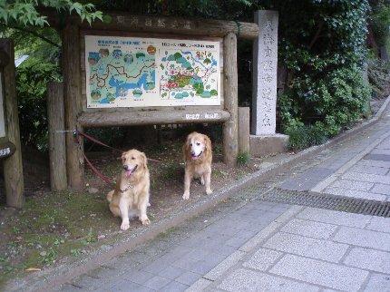 犬日記 127
