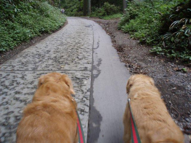 犬日記 131