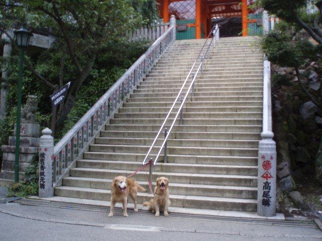 犬日記 152