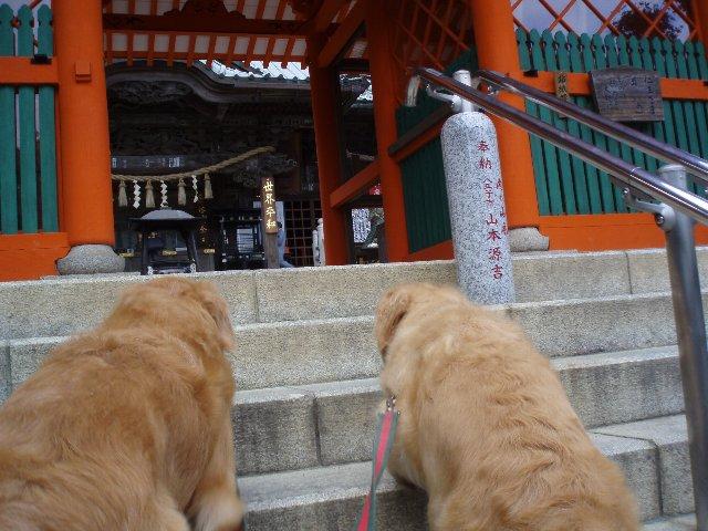 犬日記 153
