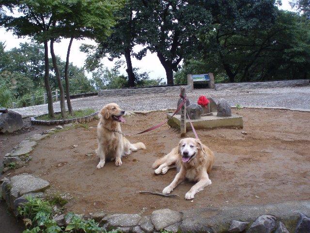 犬日記 157