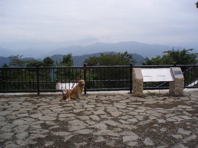犬日記 159
