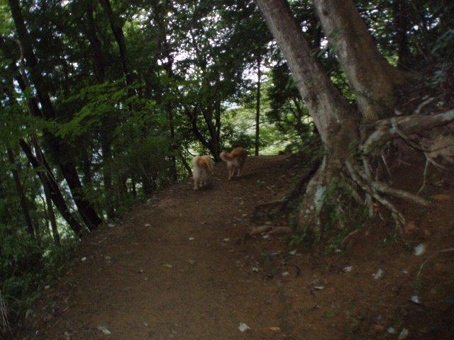犬日記 168
